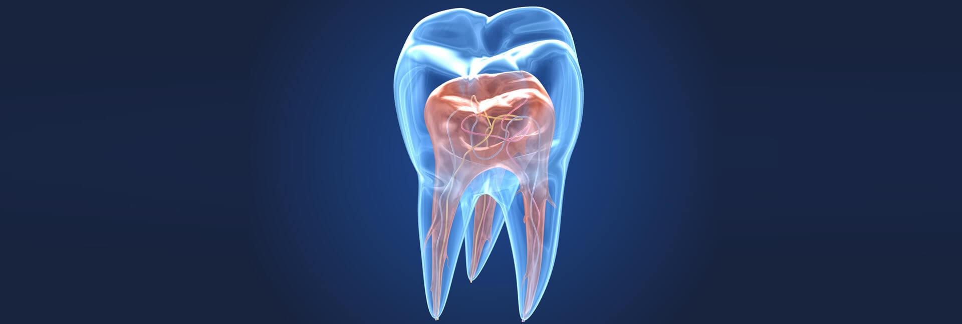 Endodontics Banner